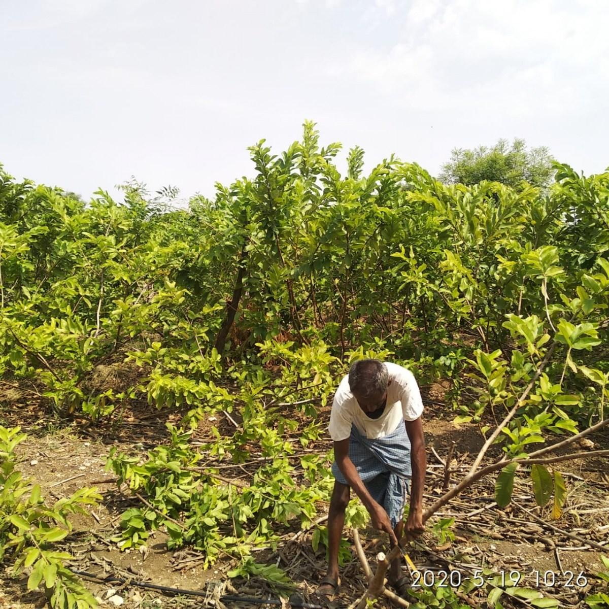 Plant preparation DEAL farm Mevundi Gadag district five. May 21, 2020. 11:31