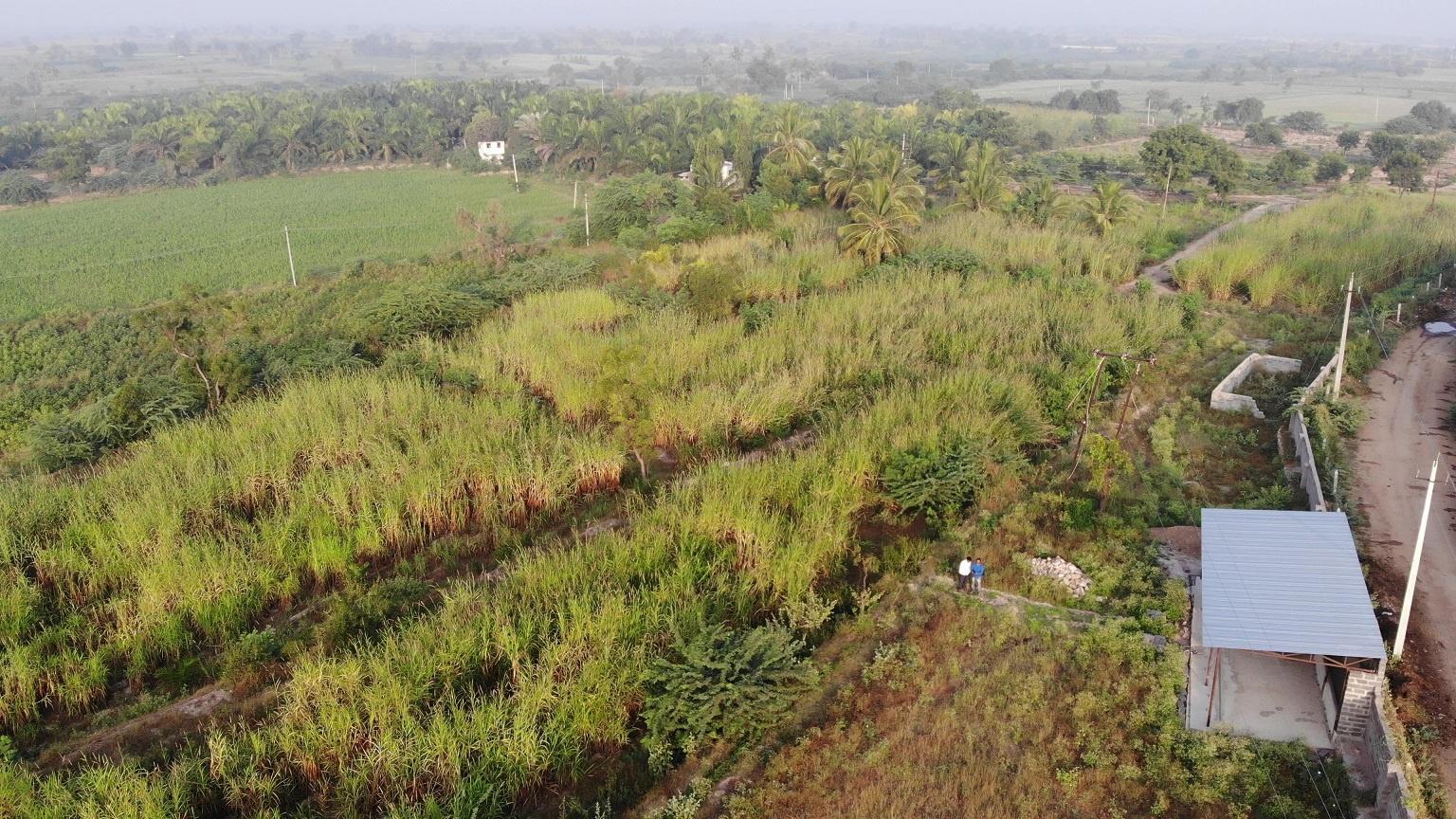 Overview of DEAL organic farm Mevundi Gadag district. April 27, 2020. 13.34.